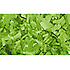 Confettis Rectangle 55 x 17mm Verts Clairs